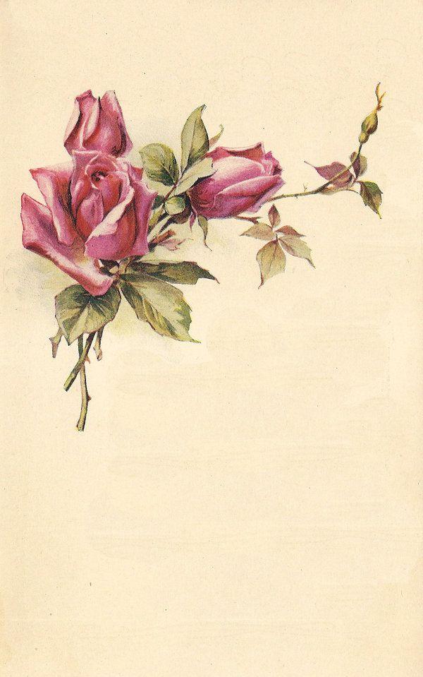 rose leaves 6 by jinifur on DeviantArt | Rahmen | Pinterest | Rahmen ...