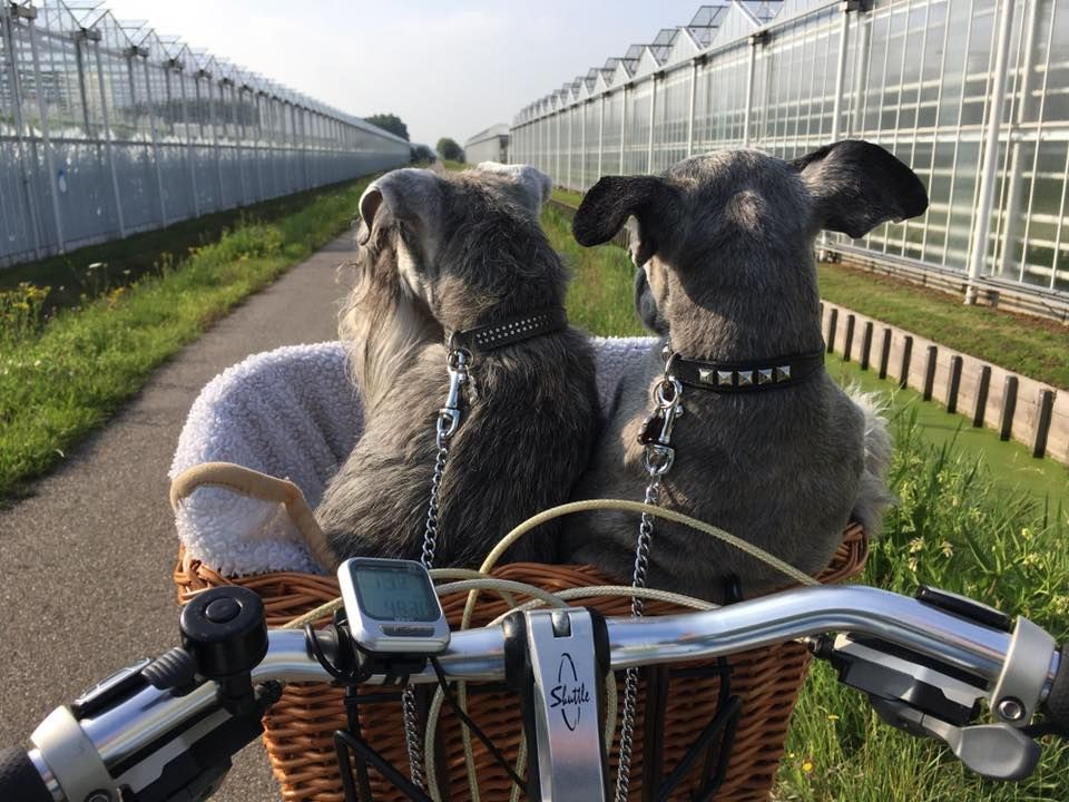 On our way to work on the bike. - Netherlands