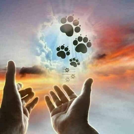Photo of I miss you – animal world – #you #I #life world #miss
