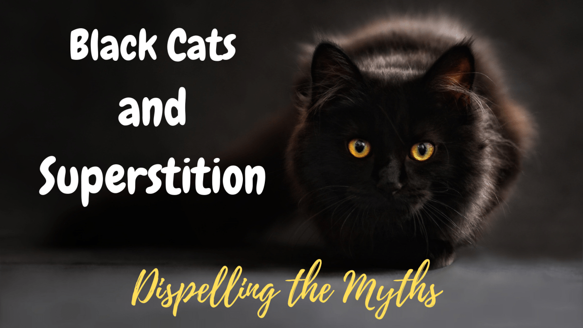Black Cats and Superstition National Defy Superstition