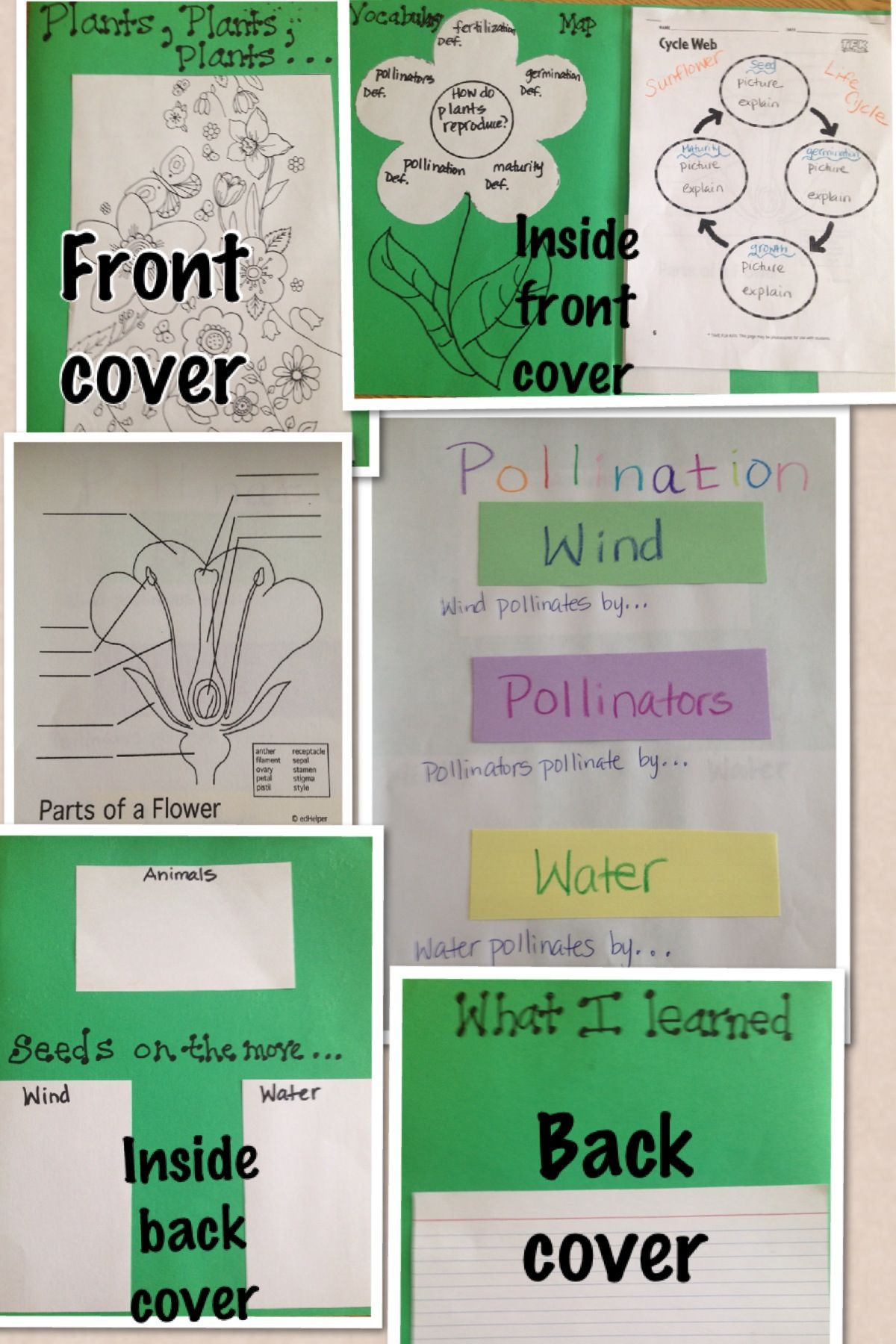 Plants Notebook Graphic Organizer Activity 4th Grade