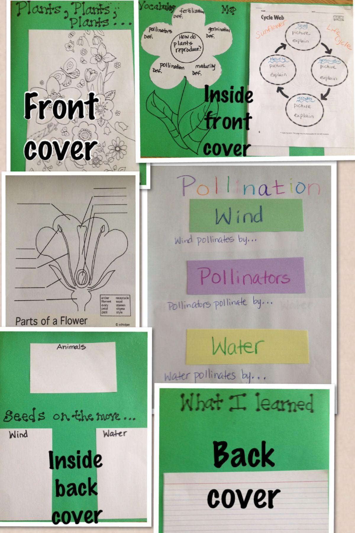 Plants Notebook Graphic Organizer Activity 4th Grade