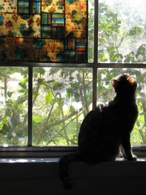 cat + window + quilt = perfect picture