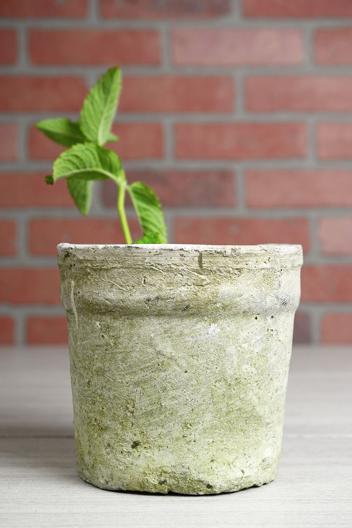 Weathered Clay Flower Pot 6.5\  & Weathered Clay Flower Pot 6.5\