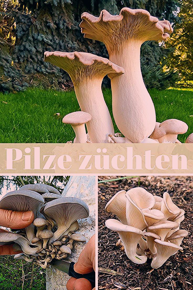 Photo of Pilzzucht | selbst.de