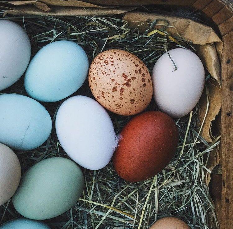 """Det første æg af en ung høne, lagt i lommen, vil give én evnen til at se om andre har magiske evner. """"I lommen havde han det første æg en ung høne havde lagt. Med dets hjælp kunne han se, hvem der var heksen. Han kiggede over på kvindesiden.  De så alle sammen gode og fromme ud. Men der! En af dem havde jo en spand over hovedet, tegnet på, at hun var heks."""""""