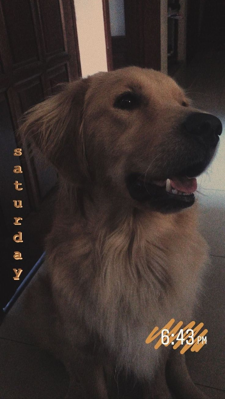 Hundetag 🐾 – #Tag #Hunde #Snapchat
