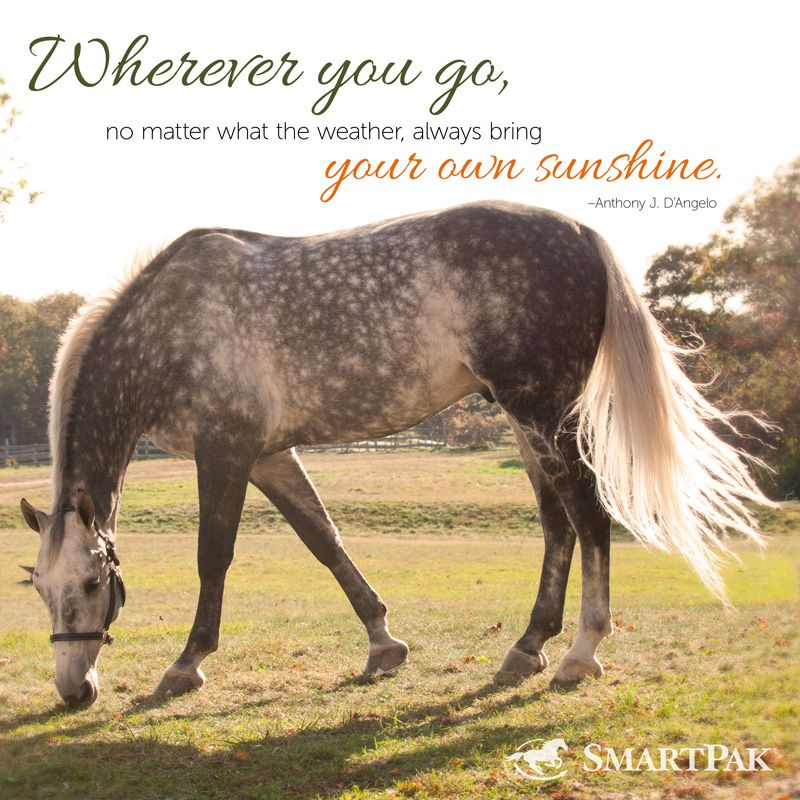 We could all use a little extra sunshine! Inspirational
