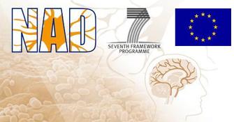 Nanopartículas que frenan el proceso neurodegenerativo del Alzheimer