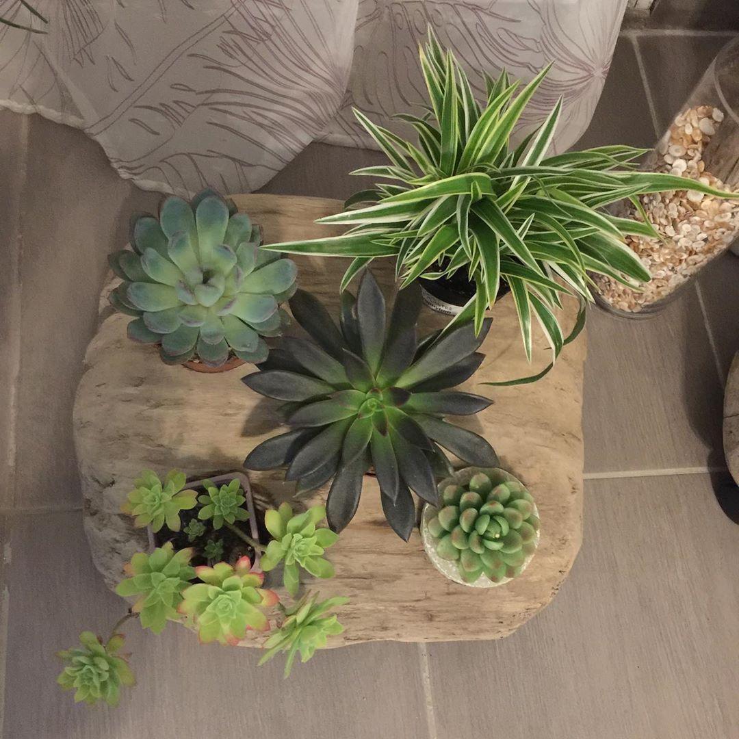 Pot Plante En Bois composition plantes, bougie et bois flotté pièce de bois