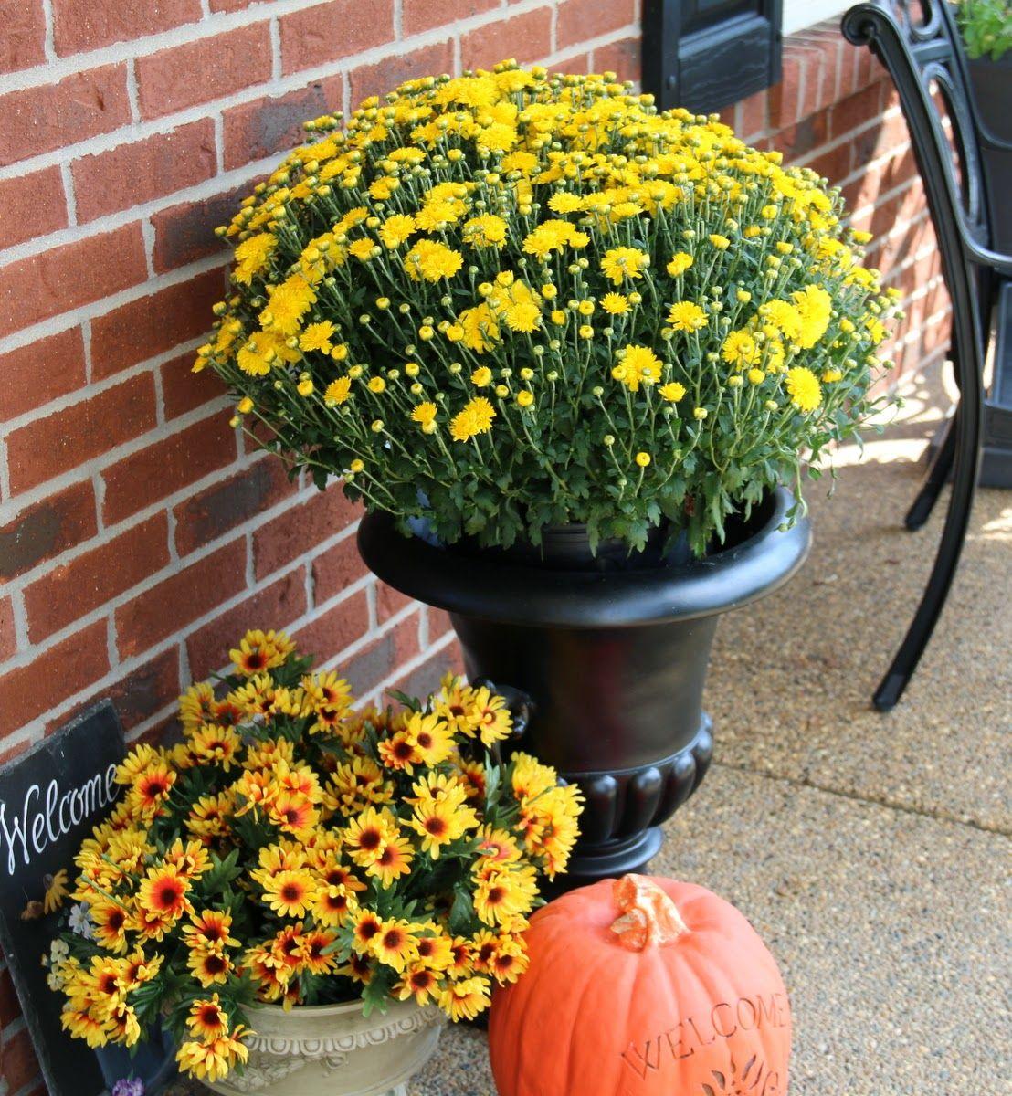 My Kentucky Living My Kentucky Life: Fall...It Finally Came.