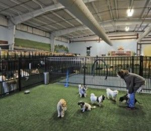 Mom And Paws Indoor Dog Park