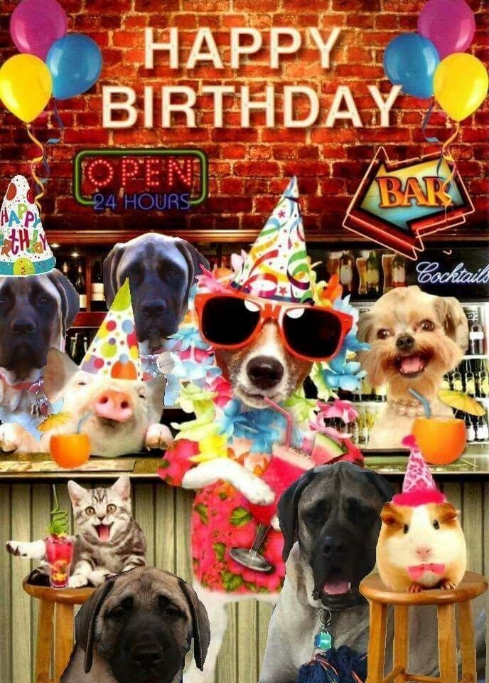 Birthday wishes from all of us. Happy birthday dog