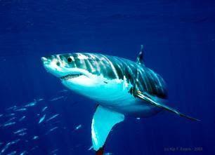 animals aquatics - Cerca amb Google (With images)   Great ...