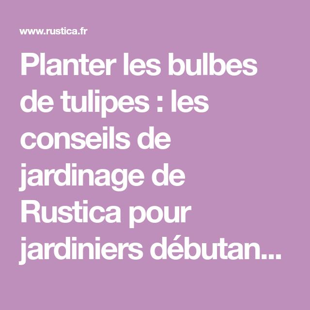 Quand et comment planter des tulipes au jardin | Bulbe de tulipe, Planter des tulipes et ...