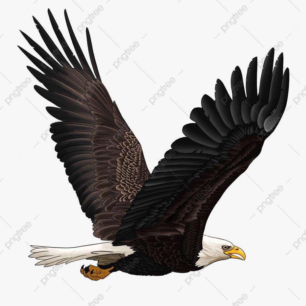 Gambar Gambar Elang Bersayap Elang Gratis Png Bahan Lapisan Transparan Clipart Sayap Gambar Elang Daquan Gambaran Besar Gambar Sayap Elang Mendominasi Png Tr In 2021 Eagle Pictures Eagle Wings Photography Logo Hd