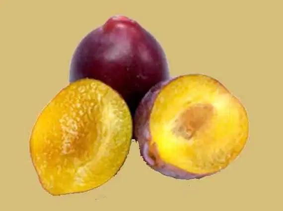 فوائد البرقوق Plum Fruit Food