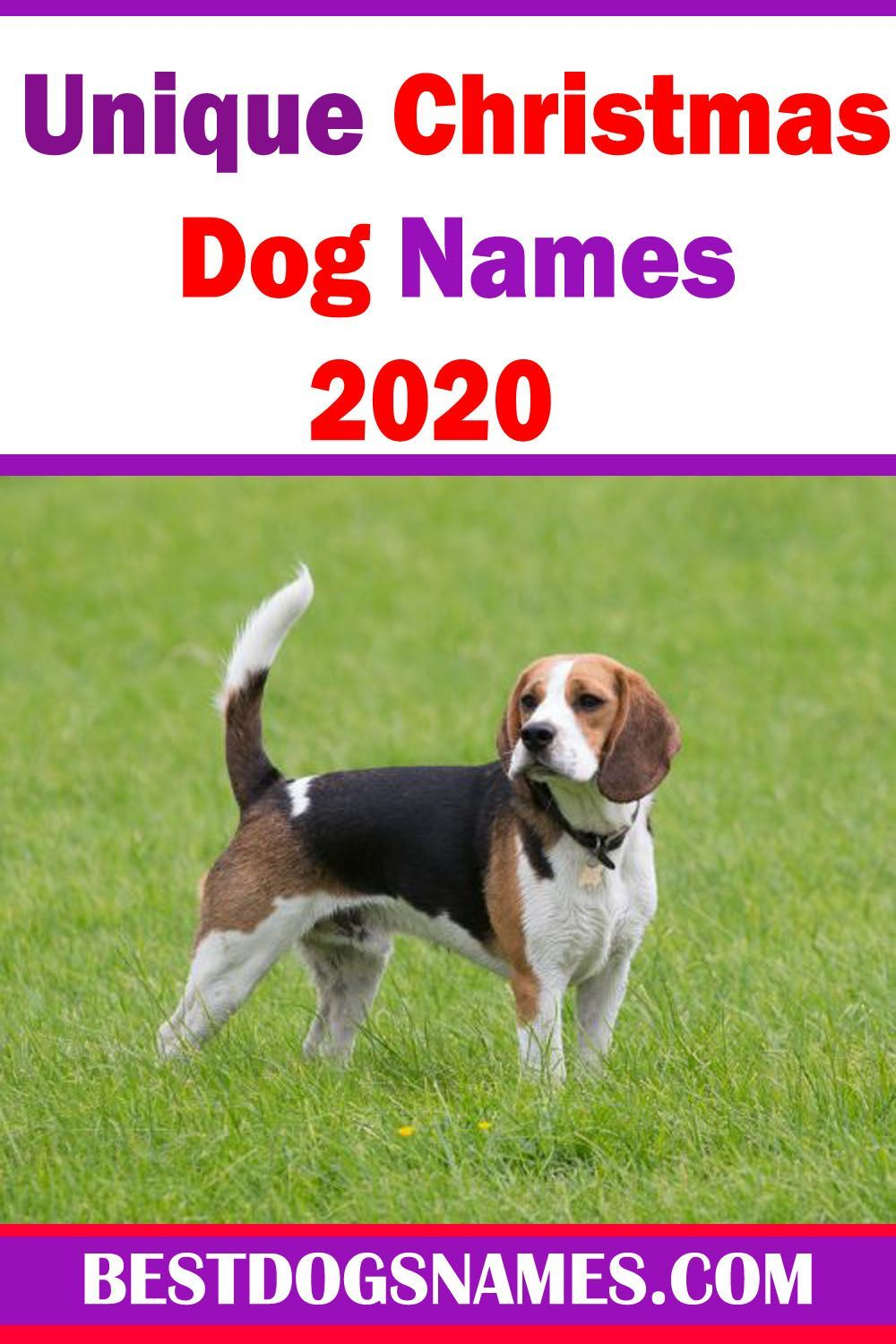 700 Unique Female Dog Names For 2020 Pawleaks In 2020 Dog Names Female Dog Names Student Debt