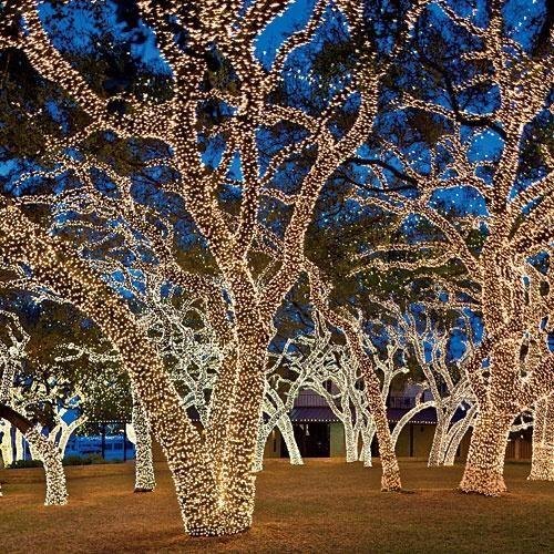 Christmas Tree In Singapore Texas Christmas Christmas Lights Outdoor Christmas
