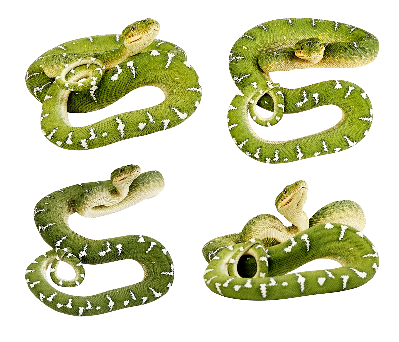 Green Snakes Png Green Snake Snake Snake Images