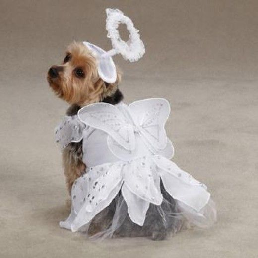 Heavenly Angel Costumes Dog Halloween Dog Halloween Costumes