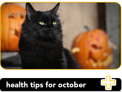 3 pet health tips to protect your pets in October Pet