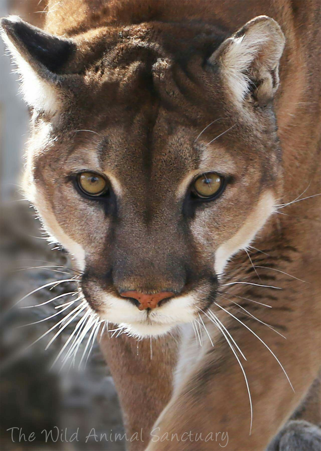Wow!💖 Wild animal sanctuary colorado, Animals wild, Wild