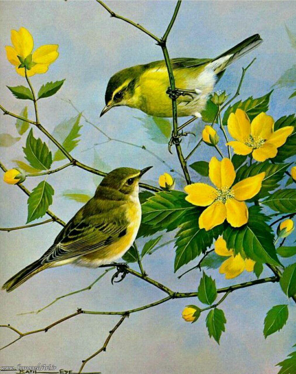 مدل نقاشی انواع پرنده Aves Pajaros Aves De Compania Dibujos