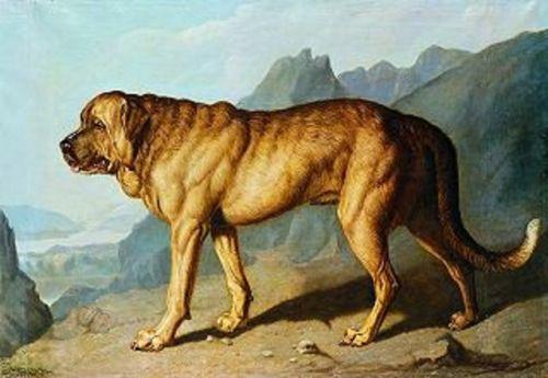 Information On Historic Dog Breed Alpine Mastiff