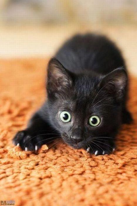 A black kitty :)