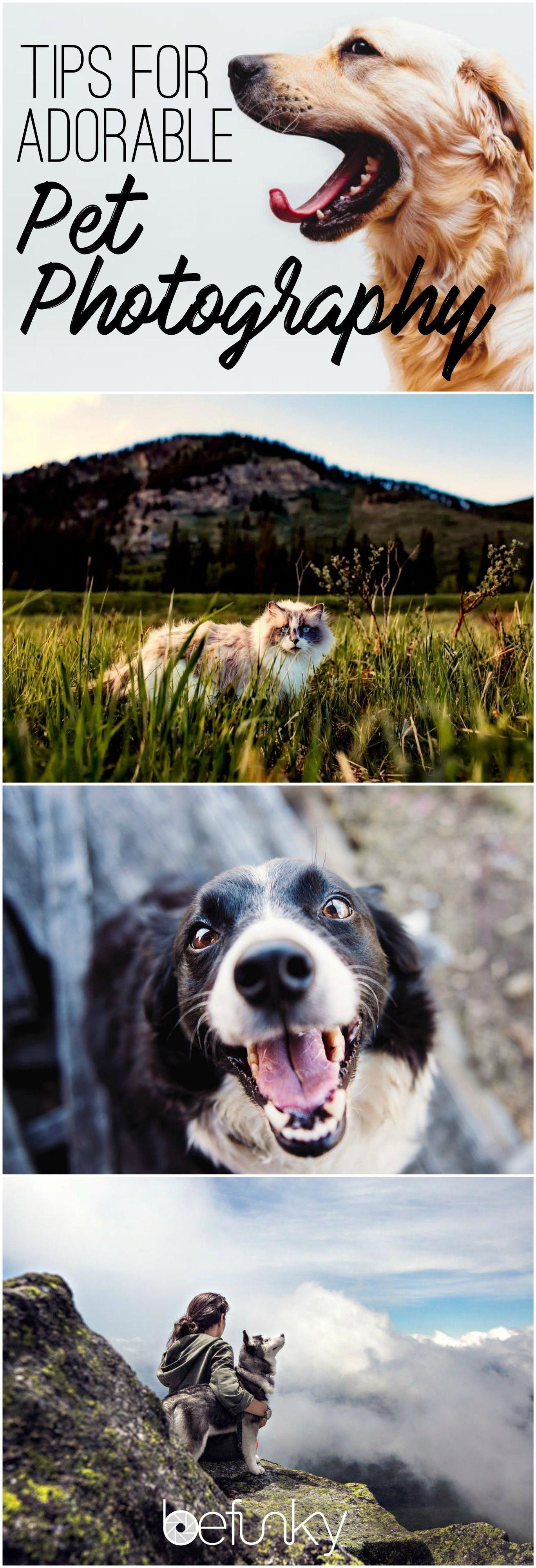 Learn how to capture your pet's personality on camera