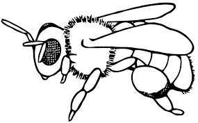 Coloriage Gratuit D Abeille.Image Result For Dessins D Insectes Insectes Abeille