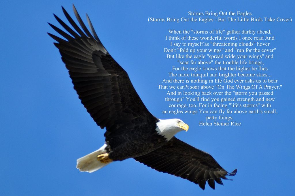 Storms Bring Out The Eagles Poems Helen Steiner Rice