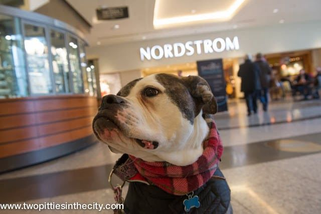 Things to Do with your Dog In Chicago: Dog-Friendly Shopping