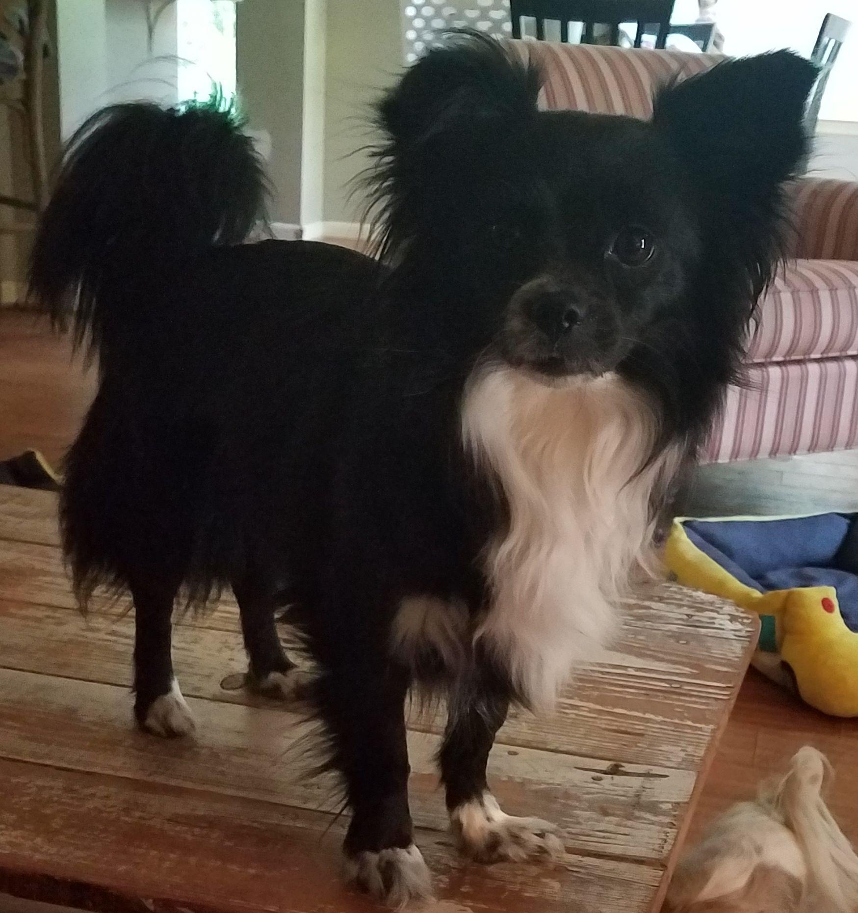 Adopt Loki on Loki, Dogs, Pets