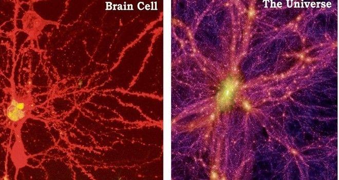 Resultado de imagen de ¿La máquina más perfecta del Universo? La Mente, el cerebro