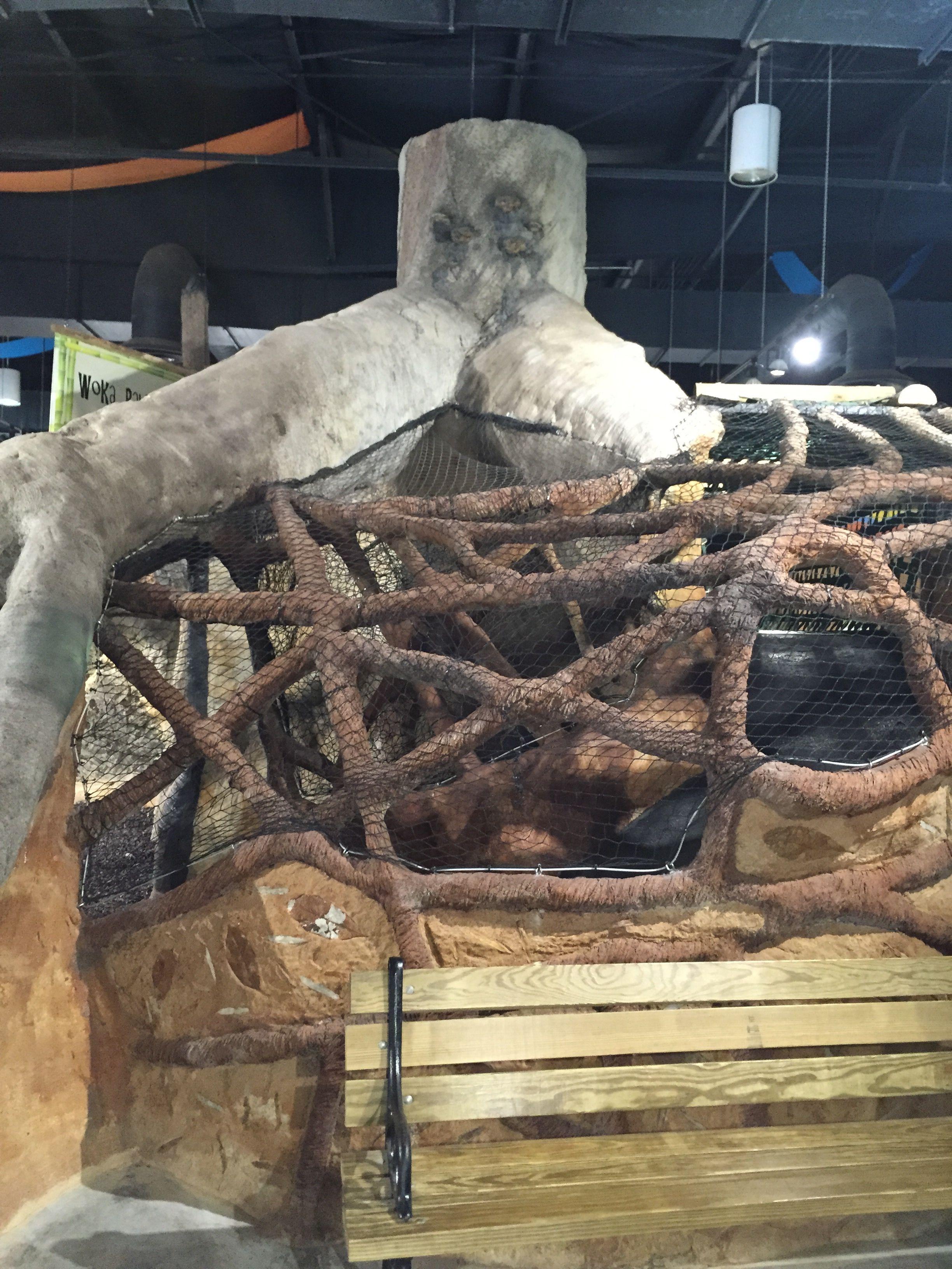 Strangler Fig Vine Bridge Indoor Play Area Knoxville Zoo