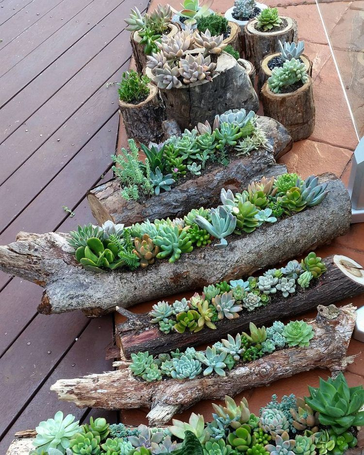 Beautiful Hollowed Out Logs And Timber Rounds Are Inexpesive Containers For Beautiful Succulent  Gardens You Can DIY