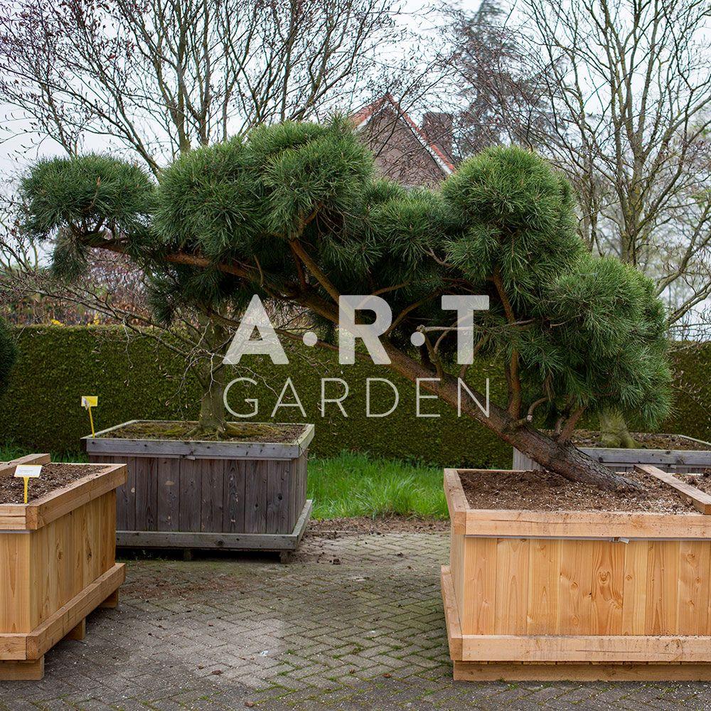 Photo Jardin Zen Chez Particulier acheter vos arbres chez le spécialiste du jardin zen