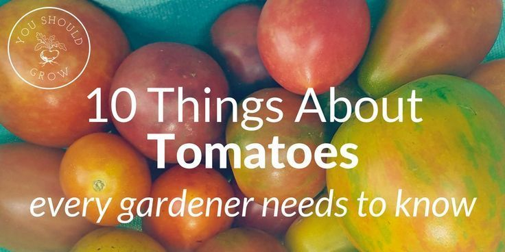 is such great info about tomatoes! Tomatoes are my favorite thing to grow in the garden. But I didn't have great success growing them until I learned some important facts about growing tomatoes. Understanding these 10 basic facts about tomatoes can mean the difference between a successful garden and a big disappointment. In this article, you