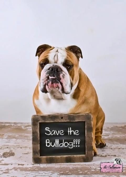 Sign and Share please ♥ http://www.causes.com/actions/1742598-save-the-english-bulldog-breed