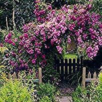 Garten für Faule: Viel Spaß, wenig Arbeit