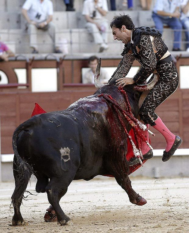 a matador in madrid, spain getting what he deserves as he gets gored in the stomach.