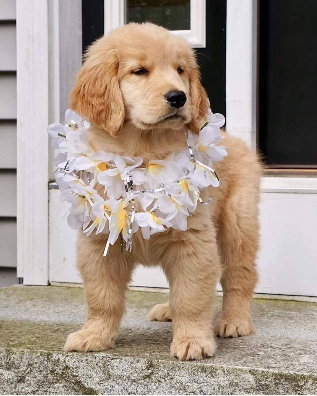 Pin By Janae Bristol On Cute Animals Cute Puppy Pictures Cute