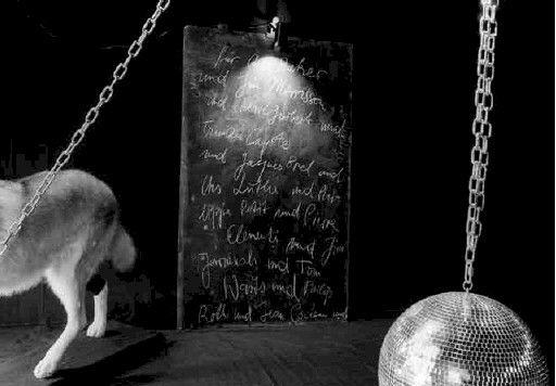 Gigolo Eine Ausstellung Fur Die Nacht Ausstellung