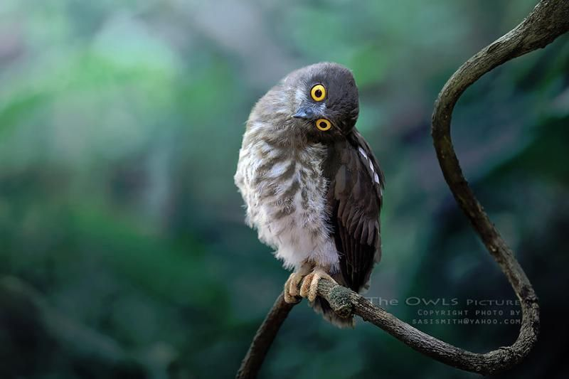 Wildlife spotted: the most impressive pictures of owls | Quiz Club
