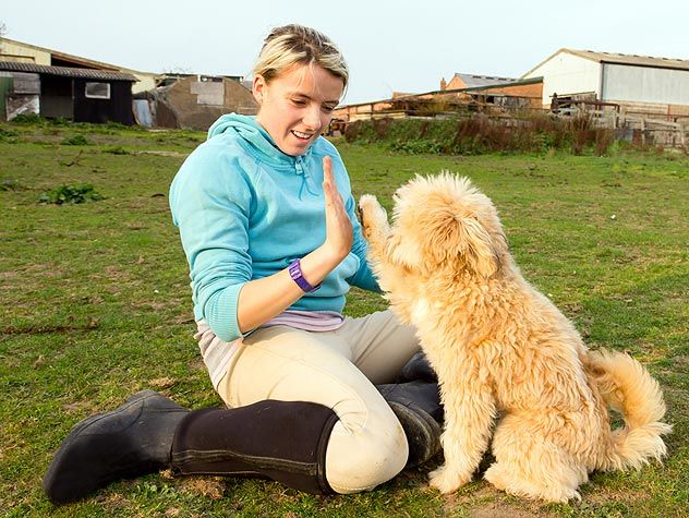 Teaching Hand Targeting To Your Dog Service Dogs Dog Training