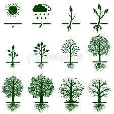 Life Cycle Of A Tree Google Search Tree Illustration Tree Life Cycle Growing Tree