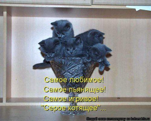 Свежая прикольная котоматрица (35 фото)