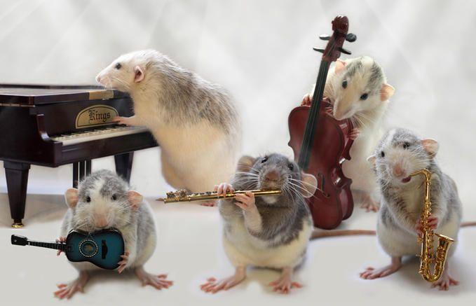 Ellen van Deelen fotografierte dieses lustiges Quintet. Mehr davon auf der Webseite